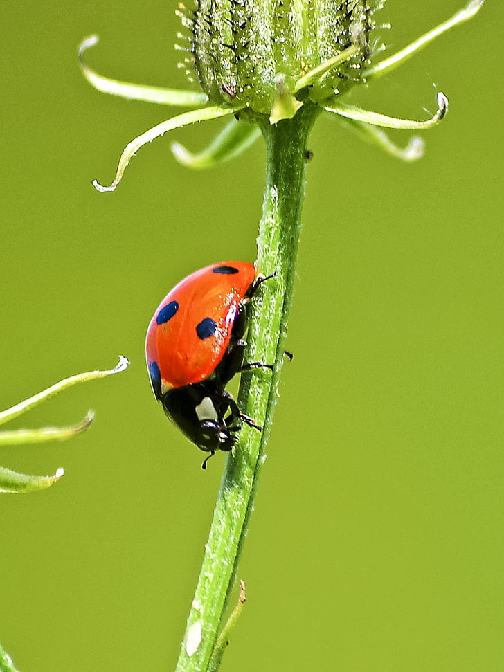 macro photography of ladybird
