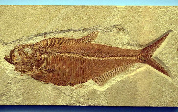 brown fish fossil on concrete surface
