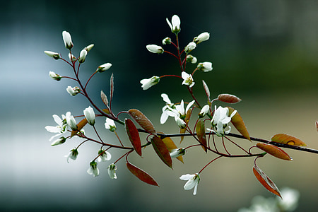 shallow focus photography of white flowers with brown leaves