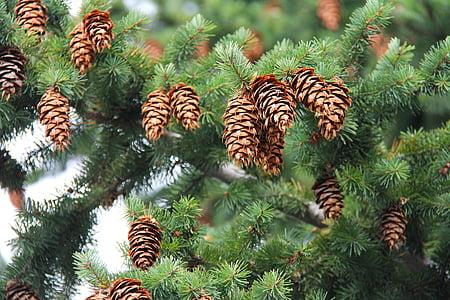 pine cons