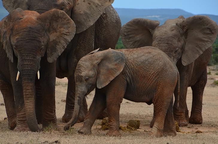 family of 4 elephants