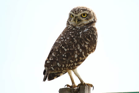 owl on rod photo