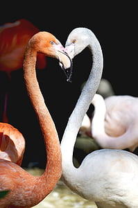 pink and white flamingos
