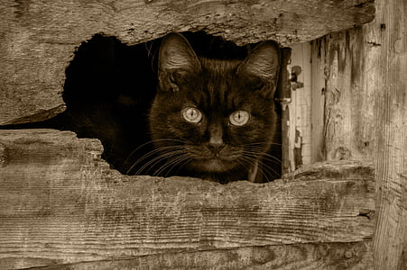 brown cat peeping outside wood