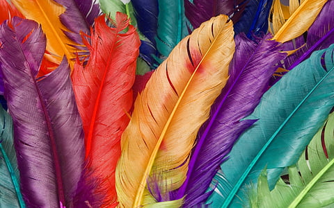 assorted-color feather decors