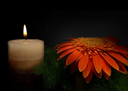 red Gerbera daisy flower and lighted pillar candle