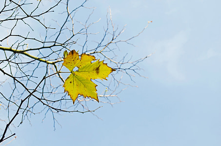 yellow and green mapple leaf