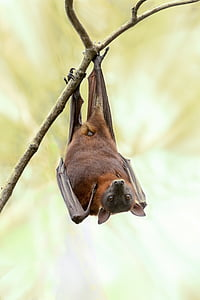 brown and black bat hanging on wooden branch