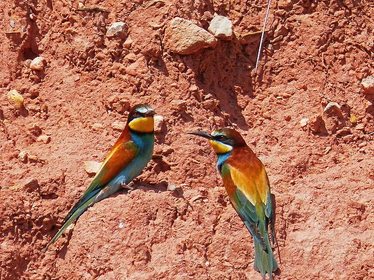 two birds on soil