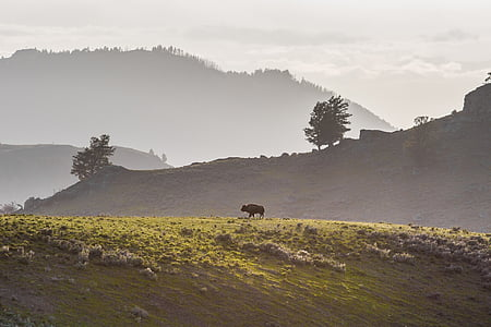 black 4-legged animal on green grass field during daytime