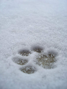 pet footprint on snow