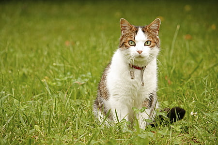 white and grey cat on green grass field