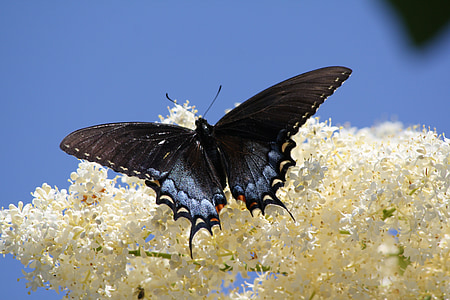 black and white butterfly on white petaled flower close-up photo