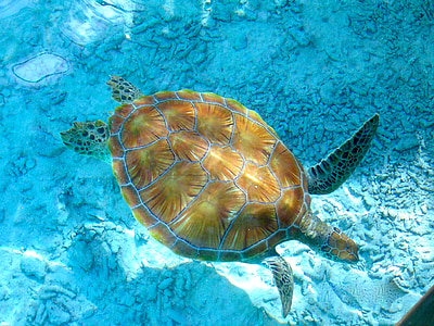 brown and gray turtle swimming in the sea