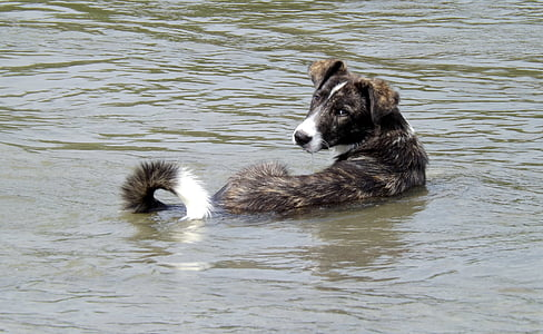 short-coated black and white dog on body of water