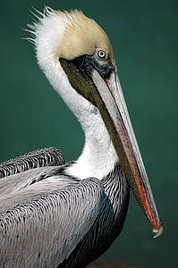 white, black, and brown bird with long beak