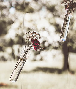 red daisy on clear glass hanging vase