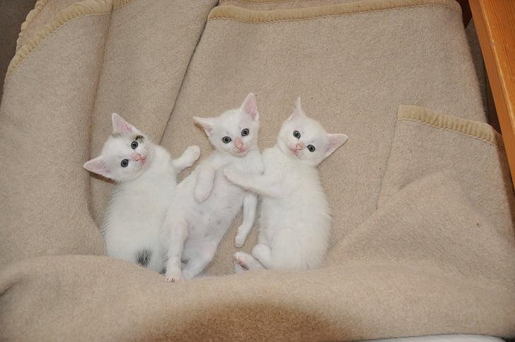 white kittens lying on gray textile