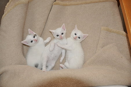 white kittens lying on gray textile