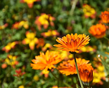 selective focus photo of orange cluster flowers