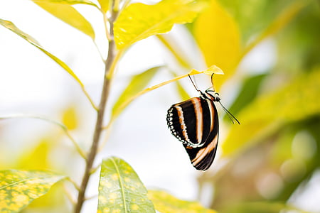 macro photography of black and brown butterfly