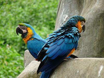animal, bird, parrot, one animal, animal themes, animal wildlife