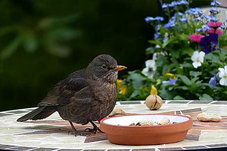 brown bird perching near brown bowl