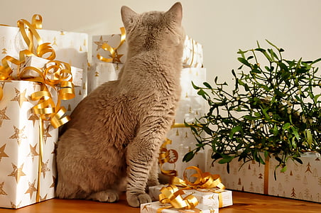 cat siting beside gift boxes