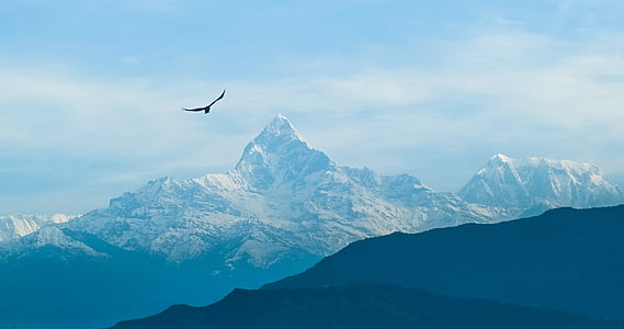 bird on flight over mountain alps