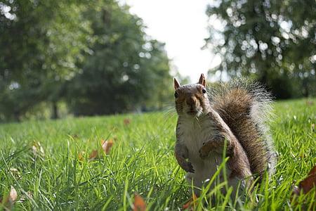 squirrel in grass field