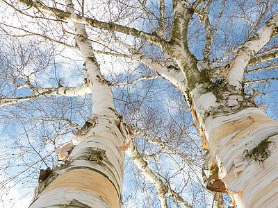 worm's eye view of bald tree