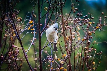 brown short-beaked bird on tree during daytime