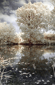 photo of white leafed trees near body of water