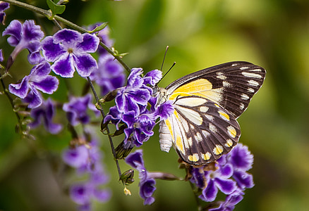 selective photo of black, white, and yellow butterfly perching on purple petaled flower at daytime