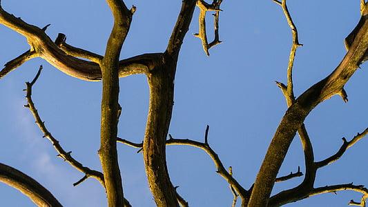 brown leafless tree