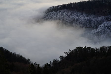 aerial view photography of forest covered by clouds