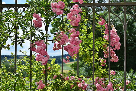 pink flowers hanged on black steel fence