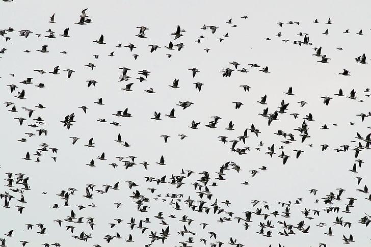 photo of birds lot