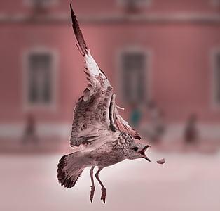 shallow focus of bird catching food