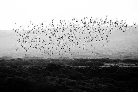 flock of birds flying over forest
