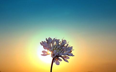 silhouette white petaled flower