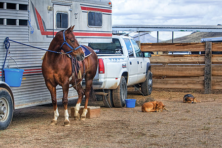 brown horse near camper trailer