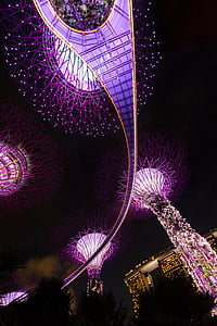 worm's eye view of purple tree lights