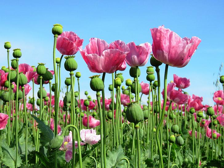 photo of pink flower field