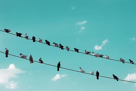 birds perching on wires