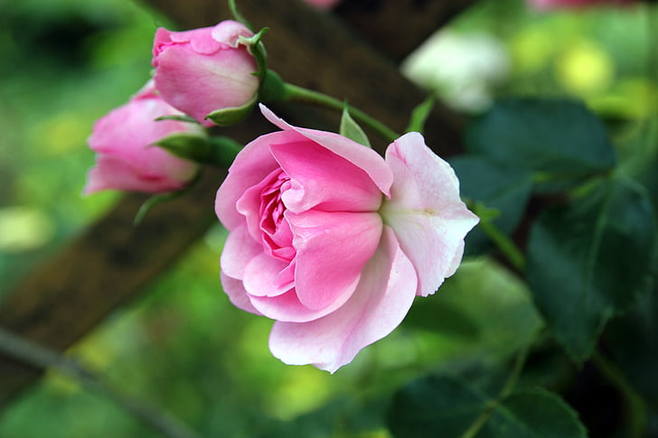 selective photo of pink flower
