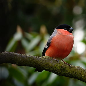 orange and black bird perching on tree branch