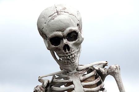 photography of human skeleton