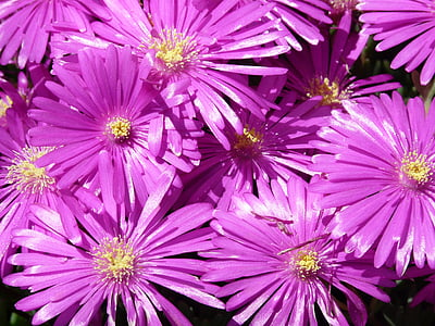purle petaled flowers close up photo