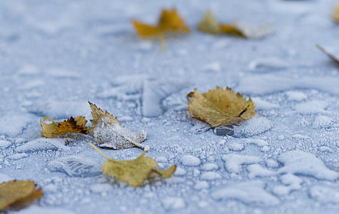 macro photography of fallen brown leaves